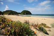 arguably the best beach in new zealand, matapouri bay, with its golden sand and calm water, framed by dunes and headland, make for a stunning beach scene at matapouri, northland, new zealand
