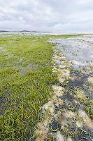 Salt Marsh , De Mond Nature Reserve, Western Cape, South Africa