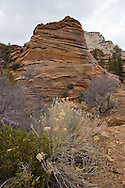 Rock wall and deserk scrub, Zion National Park