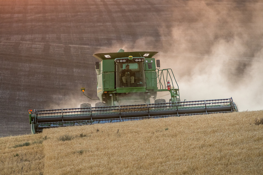 A combine harvester moves through a field of barley grains during a barley harvest in Reardan, Washington.