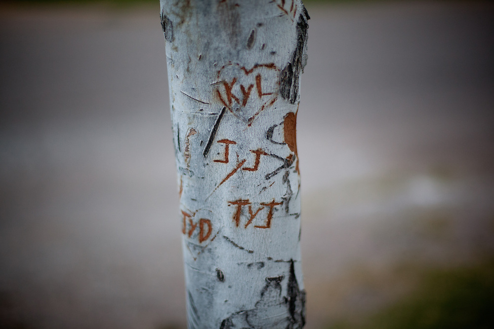 A young tree where lovers carved their names in Colonia Juarez, Mexico in July 2011. United States Presidential candidate Mitt Romney's family migrated to Mexico over 100 years ago after being granted asylum from Mexican President Porfirio Diaz after they had been pursued by the U.S. authorities for polygamy. ..(Romney is currently running for the Republican nomination.)