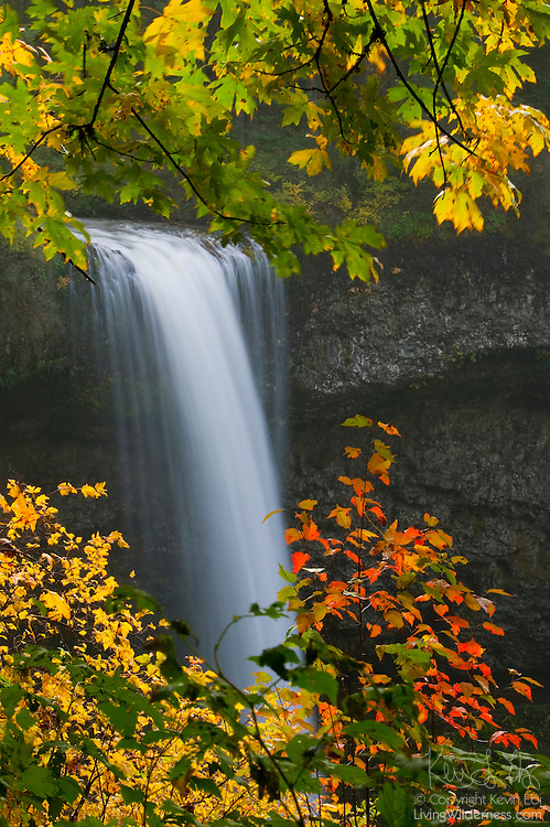 South Silver Falls, a 177-foot (54-metre) waterfall located in Oregon's Silver Falls State Park, is framed by maple leaves showing their fall colors.