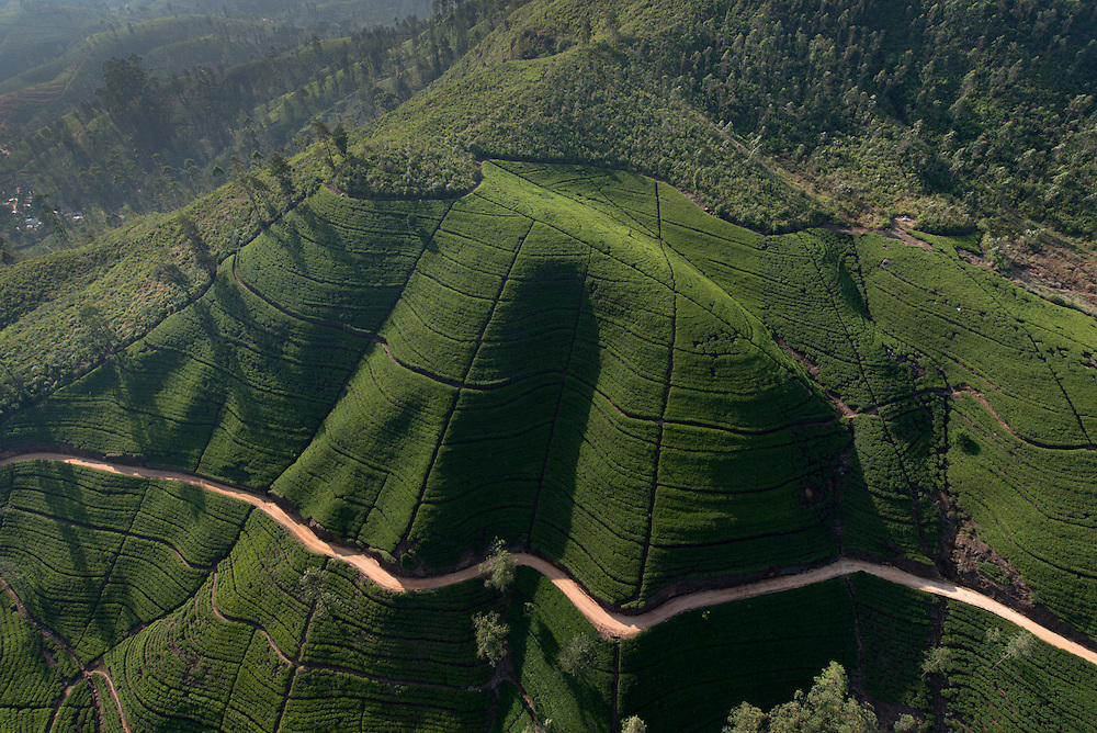 Tea estates. Aerial view. Sri Lanka.