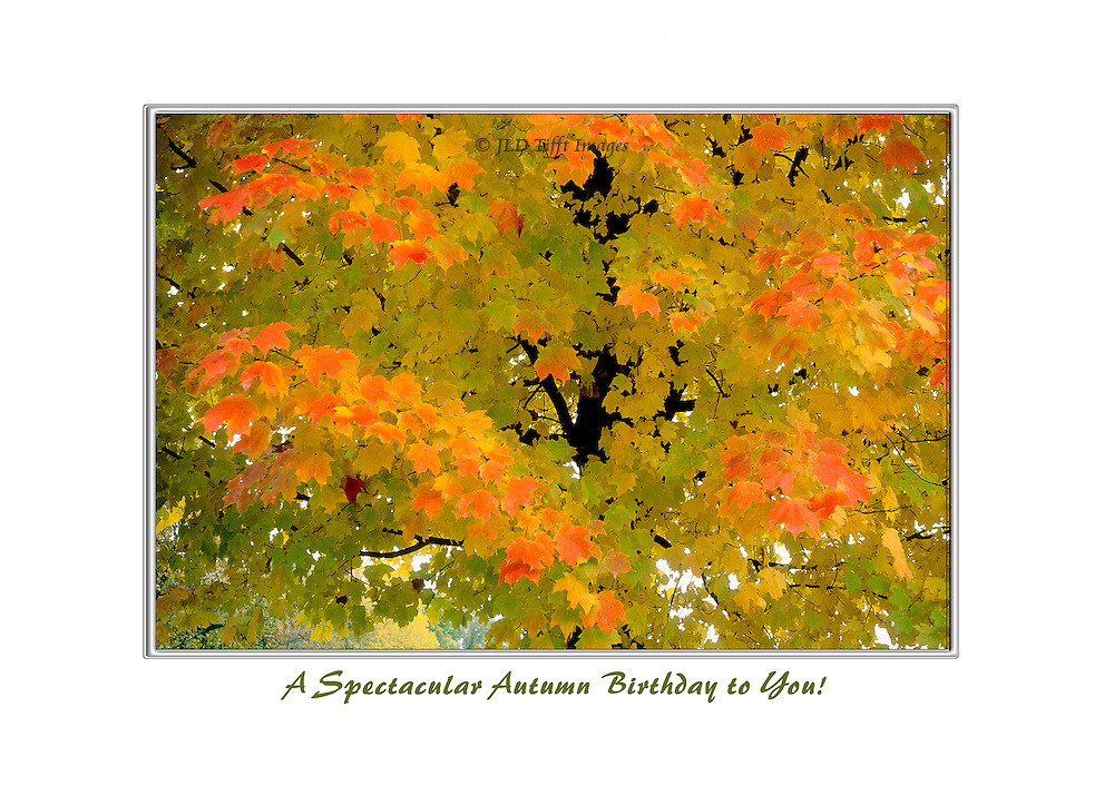 Detail of a maple tree foliage in blazing autumn colors.