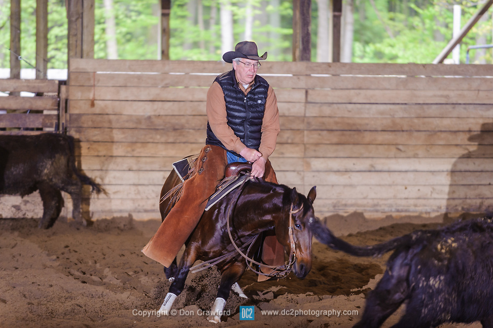 May 21, 2017 - Minshall Farm Cutting 4, held at Minshall Farms, Hillsburgh Ontario. The event was put on by the Ontario Cutting Horse Association. Riding in the 5,000 Novice Horse Class is Shawn Minshall on Wild Little Cat owned by the rider.