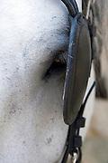 horses eye with blinkers