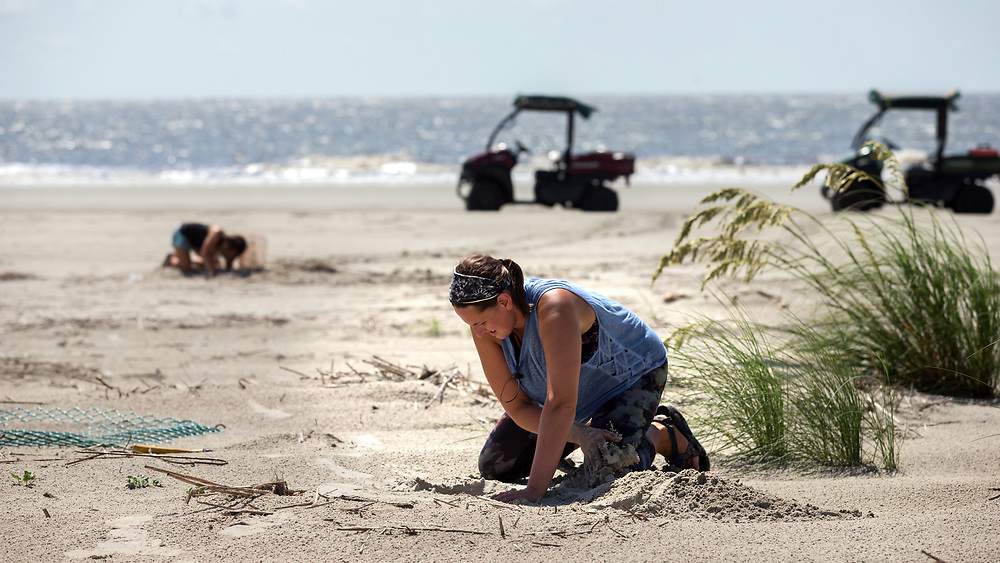 OSSABAW ISLAND, GA - JULY 10, 2019: Georgia Department of Natural Resources Turtle Technicians Caleigh Quick, 26, and Breanna Sort, 23, along with DNR's Sea Turtle Program Coordinator Mark Dodd search for loggerhead sea turtle on the beaches of Ossabaw Island, Ga., for research. (Photo by Stephen B. Morton)
