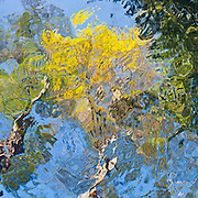 Looking up from beneath the surface. abstract fine art