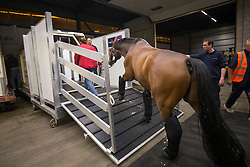 Isabell Werth's,  (GER), El Santo NRW getting into his flying stall             <br /> Departure of the horses to the World Cup Finals in Las Vegas from Schiphol - Amsterdam 2015.<br />  © Hippo Foto - Dirk Caremans