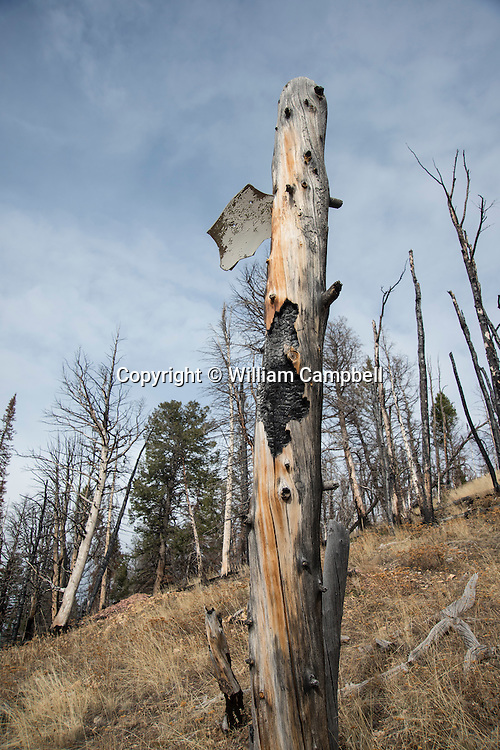 The remains of a SAC B-47 bomber that crashed at the 8,300 foot level of Emigrant Peak near Livingston, MT on the night of July 23, 1962. A piece of th aircraft is still embedded in a standing tree. The B47 was on a  nighttime cold war training flight from Dyess Air Force base in Texas. Four airman lost their lives in the crash.