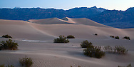 Early morning sun softly illuminates the gentle curves of Death Valley's Mesquite Flat dunes.