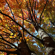 """Beneath Autumn's Splendor""<br />