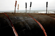 Whale blubber and muscle is cut off a 42-foot fin whale calf that beached itself then died in Stinson Beach, Calif., Monday, August 19, 2013, during a necropsy to determine why the mammal was beached.