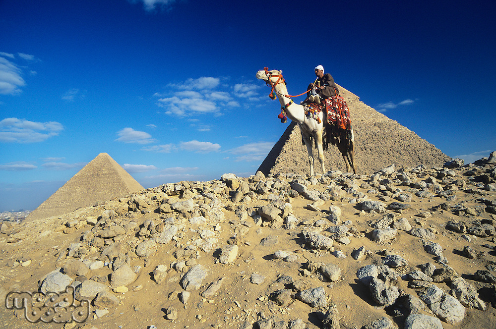 Camel Rider by Pyramids of Giza