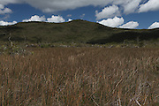 Canaa dos Carajas_PA, Brasil.<br /> <br /> Floresta Nacional de Carajas (Flona) em Canaa dos Carajas, Para.<br /> <br /> The Carajas National Forest in Canaa dos Carajas, Para.<br /> <br /> Foto JOAO MARCOS ROSA / NITRO <br /> <br /> FOTO: JOAO MARCOS ROSA / NITRO