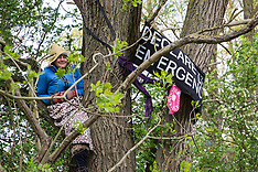 2019-04-27 Protesters prevent HS2 tree felling