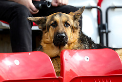 A dog takes his seat at Sincil Bank ahead of the Sky Bet League One fixture between Bristol Rovers and Lincoln City - Mandatory by-line: Robbie Stephenson/JMP - 14/09/2019 - FOOTBALL - Sincil Bank Stadium - Lincoln, England - Lincoln City v Bristol Rovers - Sky Bet League One
