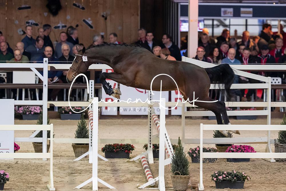 014, Quick-Star Ter Putte<br /> Hengstenkeuring BWP - Lier 2019<br /> © Hippo Foto - Dirk Caremans<br /> 18/01/2019