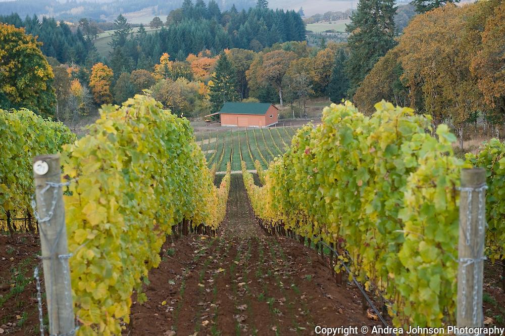 Revana Vineyard, Dundee Hills, Willamette Valley, Oregon