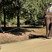 Man Leading Female Asian Elephant in Ban Pak Ou, Laos <br />