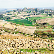 Rows of young vines in an old French vineyard with village of Sancerre on the hilltop in the distance