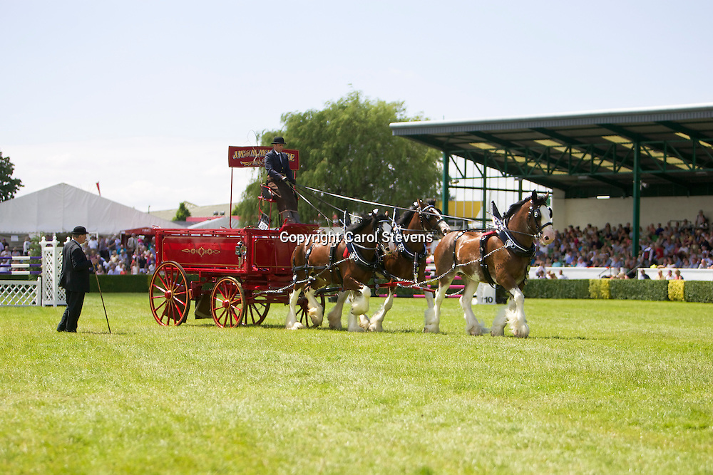 Mr John McIntyre's Clydesdale Team driven by Ronald Brewster<br /> 3rd in Team Class