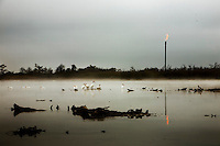 White pelicans congregate on lake, with oil refinery in background, in Venice, LA.    Copyright 2011 Reid McNally