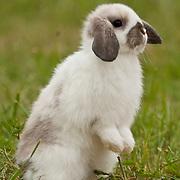 20120401 Alpacas and Rabbits