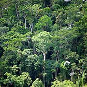 La foret primaire est encore existante sur les hauteurs de la Serra Bonita a Camacan///The primary forest is still existing on the heights of Serra Bonita in Camacan