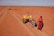 Tørke i Kenya, Afrikas horn. I det Nordøstlige område har det ikke i 4 år og alt er knas tørt, vandhullerne er tørret ud og folk må bruge alt deres energi på at skaffe vand. Nomadefolket der lever i det nordøstlige Kenya har mistet næsten alle deres geder, kvæg og kameler, som er døde som følge af tørken. Der er ingen græs eller anden mad til dyrene tilbage og vandressourserne sparsomme. Det er dyr som er livsvigtige for nomader, da det er alt hvad de ejer og har og uden dyr bliver livet svært og de kan ikke længere skaffe mad selv. I landsbyen Barmil venter folk på vand, da deres brønde er udtørret, de er helt afhængige af donationer til at en vandlastbil kommer og fylder byen vandtank op. Der er en gåtur med æsler på 6 timer hver vej for at hente vand.