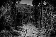 """Penan men, Dennis (L) and Adonia (R), walk down a logging road, one of a network of logging roads used by Shin Yang Group to """"selectively"""" log 6 months before to feed global timber consumption demands.  Bulldozers ripped straight up the mountain to cut down the biggest  rainforest trees as quickly as possible.  Now loggers have left behind a wounded forest, arboreal debris strewn all along the perimeter of this road, through once-productive hunting grounds for the Penan across the Akah River in Long Benali, in the heart of their ancestral land.  The numbers of wild animals, like wild boars, monkeys, deer, hornbills, etc. have declined precipitously. The heart of the Borneo Rainforest, Sarawak, Malaysia."""