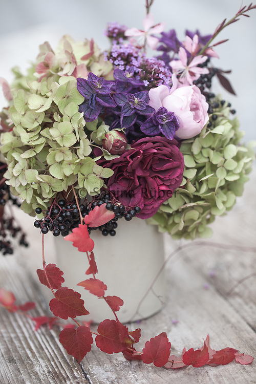 Autumnal flower arrangement with Hydrangea, Rosa 'Munsted Wood', Salvia viridis, Boston creeper, Gaura and elderberries