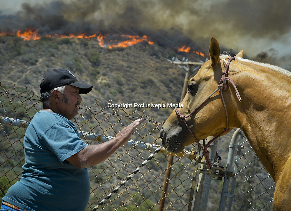 June 20, 2016 - Duarte, California, U.S. - SAMUEL PADILLA calms a horse he evacuated from the ranch he lives on in Fish Canyon as the Fish Fire burns above Duarte and Los Angeles County. The fire was 1,400 acres at 2:50pm.<br /> &copy;Exclusivepix Media