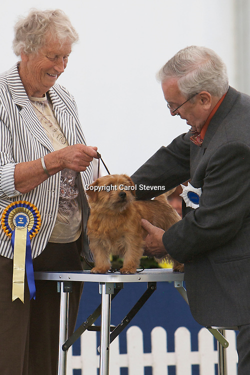 Moortop Another No Choice<br /> Mrs M E Atkinson<br /> Norfolk Terrier