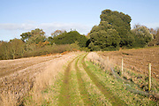 Heathland plants autumn landscape, Shottisham, Suffolk Sandlings, Suffolk, England