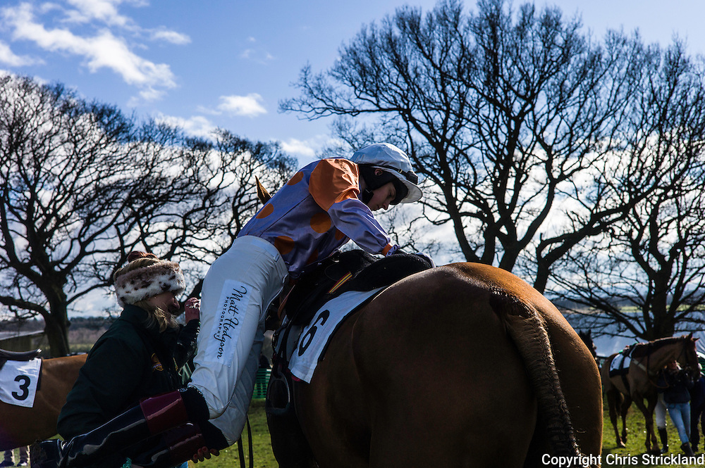 Corbridge, Northumberland, England, UK. 28th February 2016. A jockey mounts his ride in the paddock ready for action at the Tynedale Hunt annual Point to Point horse racing fixture.