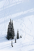 Trees and tracks in snow, Paradise Valley; Mount Rainier National Park, Washington.