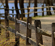Spring Fence at the Bayard Cutting Arboretum on Long Island