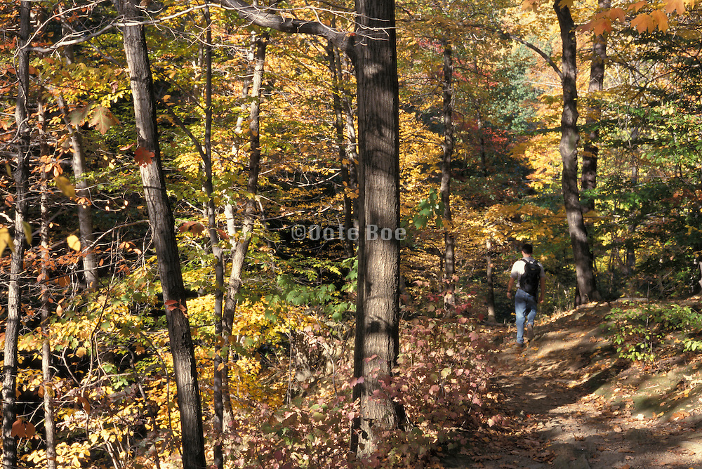 fall foliage with man walking by himself