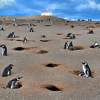 Penguin Colony at Penguin Reserve on Magdalena Island, Chile<br /> Imagine seeing thousands of penguins on a small island that is only about 210 acres!  From Punta Arenas, Chile, you take a boat about 20 miles through the Straits of Magellan before arriving at Magdalena Island.  It is uninhabited … unless you are counting the 120,000 Magellanic penguins.  You can walk among them as they waddle along, poke out of burrows, care for their chicks and gather in social circles. What an amazing neighborhood!