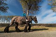 Trekpaard<br /> Bietentocht 2016<br /> © DigiShots