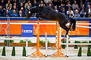 Limit B<br /> KWPN Hengstenkeuring 2019<br /> &copy; DigiShots