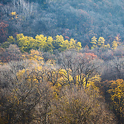Landscape photograph of a tree covered hillside in autumn color.
