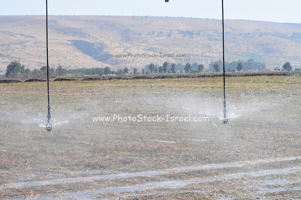 Israel, Hula Valley, Irrigation robot watering a field close up of the sprinklers