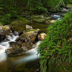 Wild Brook in Vermont's Green Mountains.  Eden, Vermont.
