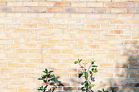 Plant on a  brick wall