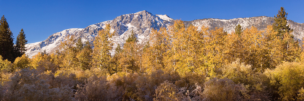 A panorama image of autumn leaves in front of a snowy Mount Tallac. Autumn leaves and a snowy mountain. It's a beautiful cliche. But it's a cliche that can be so hard to capture. Some years the leaves are gone by the time it snows. Some years the snow comes before the leaves change. From the time I envisioned this composition to the time when all the elements fell ito place was three years.