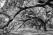 Fine Art - Trees