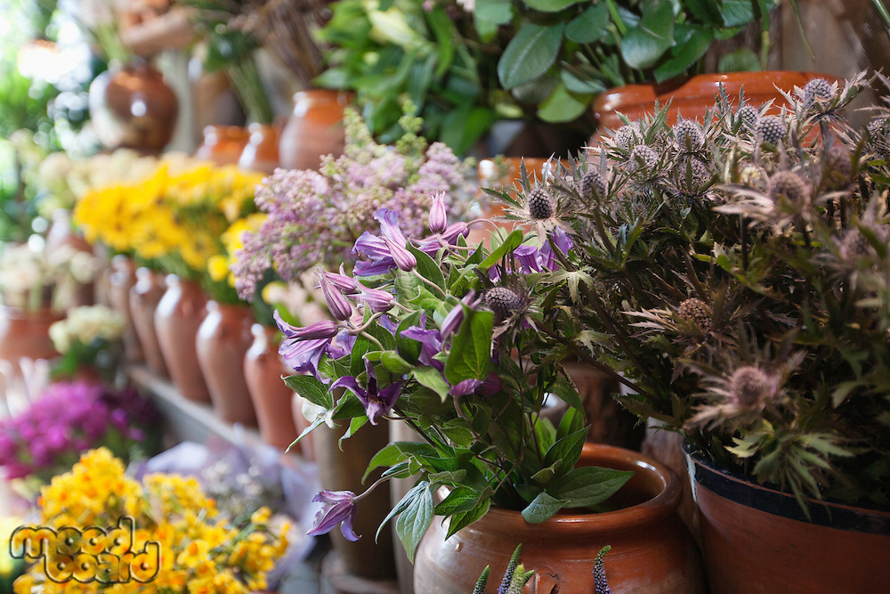 Close-up of bunch of flowers pot in florist shop