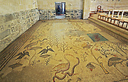 Israel, Sea of Galilee, Tabgha, Church of the Multiplication of Loaves and Fishes, mosaic floor